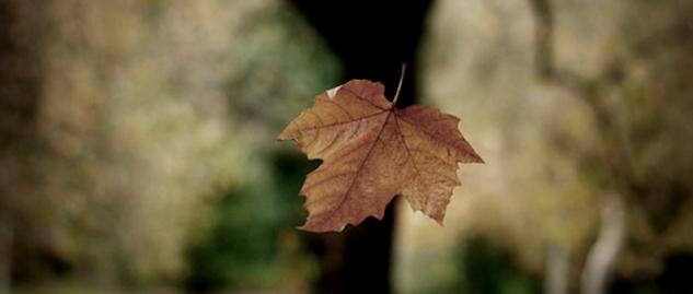 folha caindo