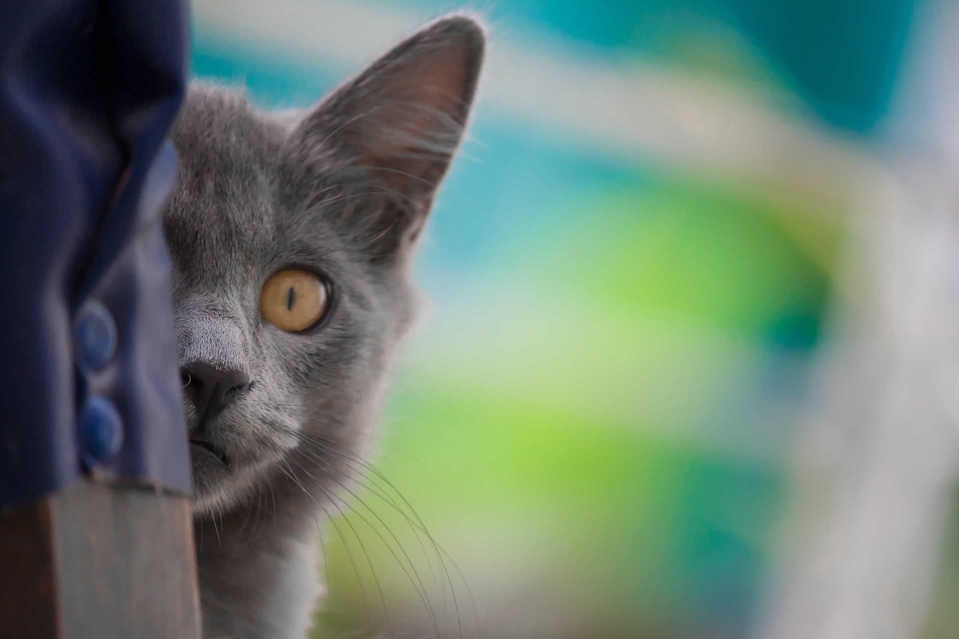 gato-espiando-alexis-pixabay