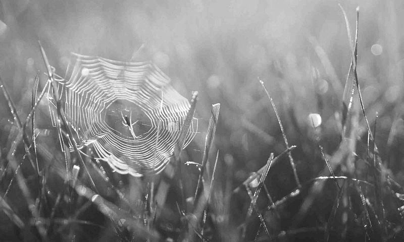 tinha-uma-aranha-no-meio-do-caminho-conexao-planeta